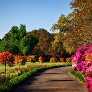bellingrath-gardens-1612727_640